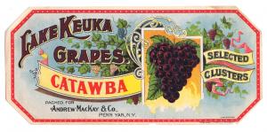 illustration of grapes