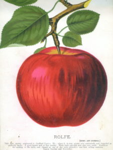Illustration of a red apple with three leaves labeled ROLFE and the bottom.