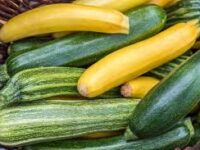 A pile of green and yellow zucchini